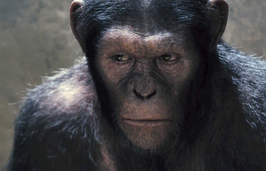 """""""Rise of the Planet of the Apes"""""""
