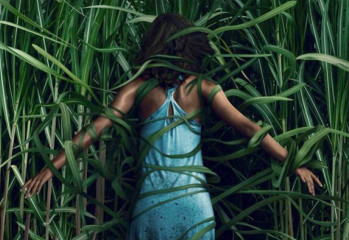 in-the-tall-grass-09201918