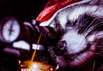 killer-raccoons-2-20200805